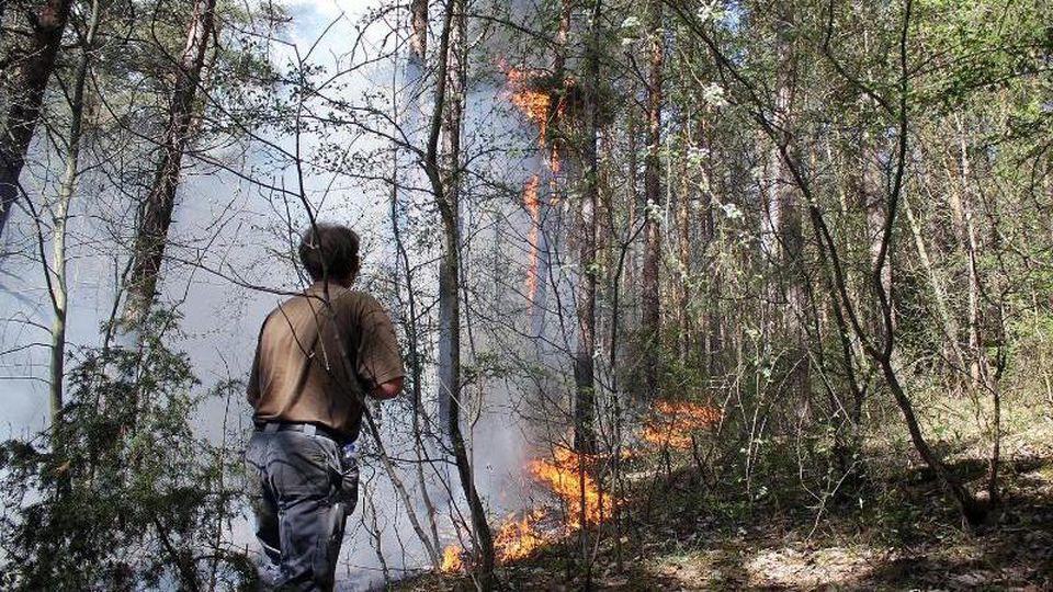 Ein Wald brennt in der Nähe von Plaue. Foto: WichmannTV