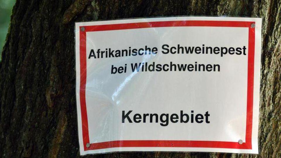 """""""Afrikanische Schweinepest bei Wildschweinen Kerngebiet"""" steht auf einem Schild. Foto: Bernd Settnik/dpa-Zentralbid/dpa/Archivbild"""