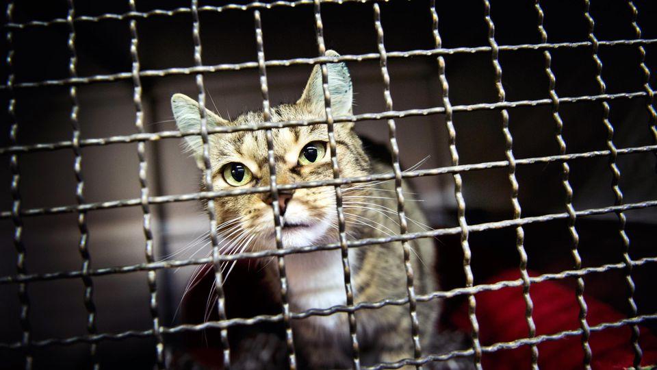 Symbolbild: Katze in Tierheim