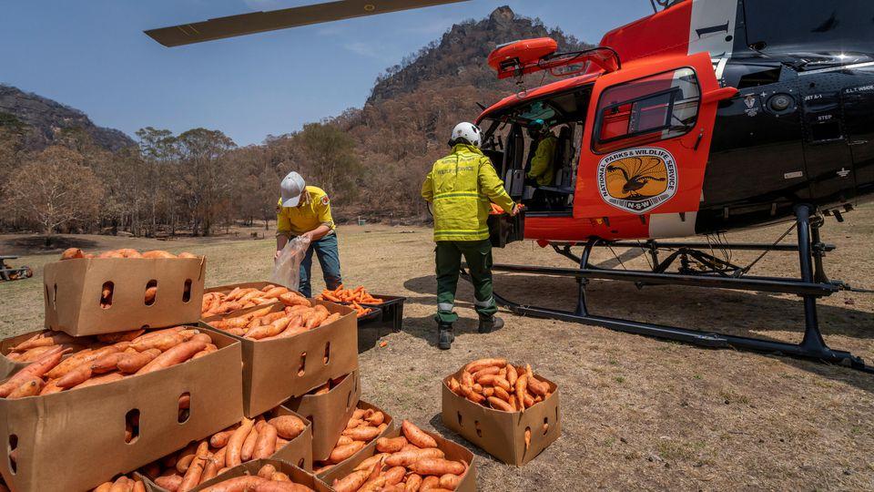 Ein Helikopter in New South Wales, Australien, wird mit Karotten und Süßkartoffeln beladen