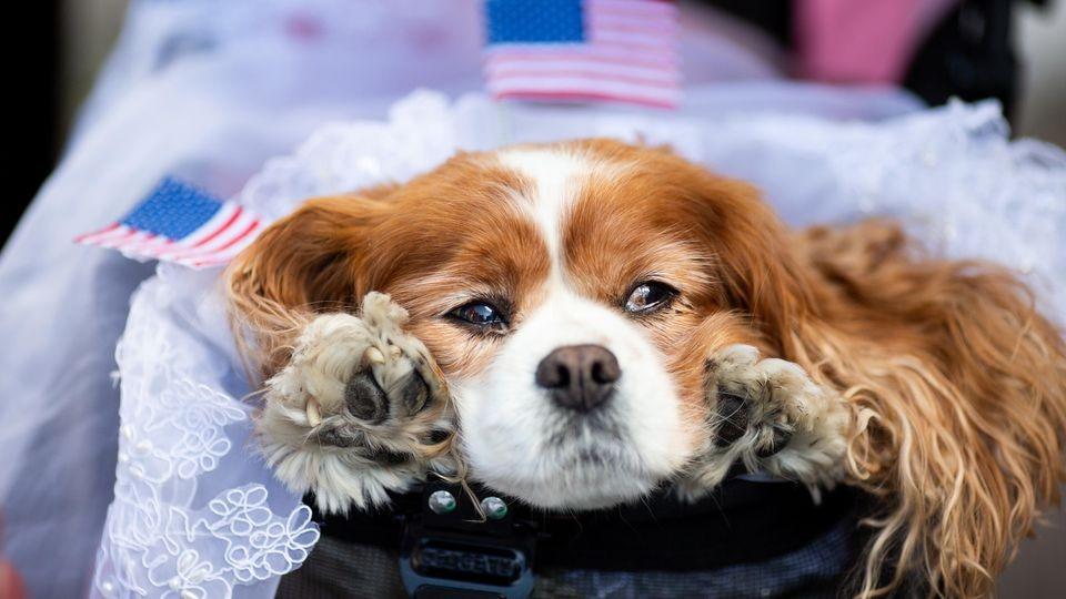Hund Camilla