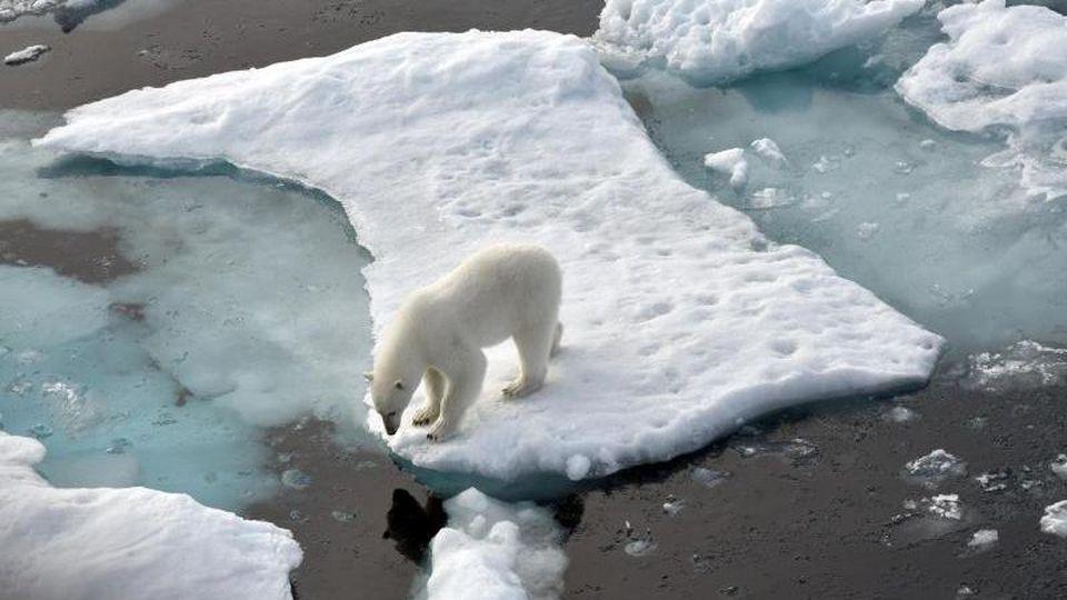 Ein Eisbär steht im Nordpolarmeer auf einer Eisscholle. Das Meereis in der Arktis ist auf die zweitniedrigste Ausdehnung seit Beginn der Messungen vor rund 40 Jahren geschrumpft. Foto: Ulf Mauder/dpa