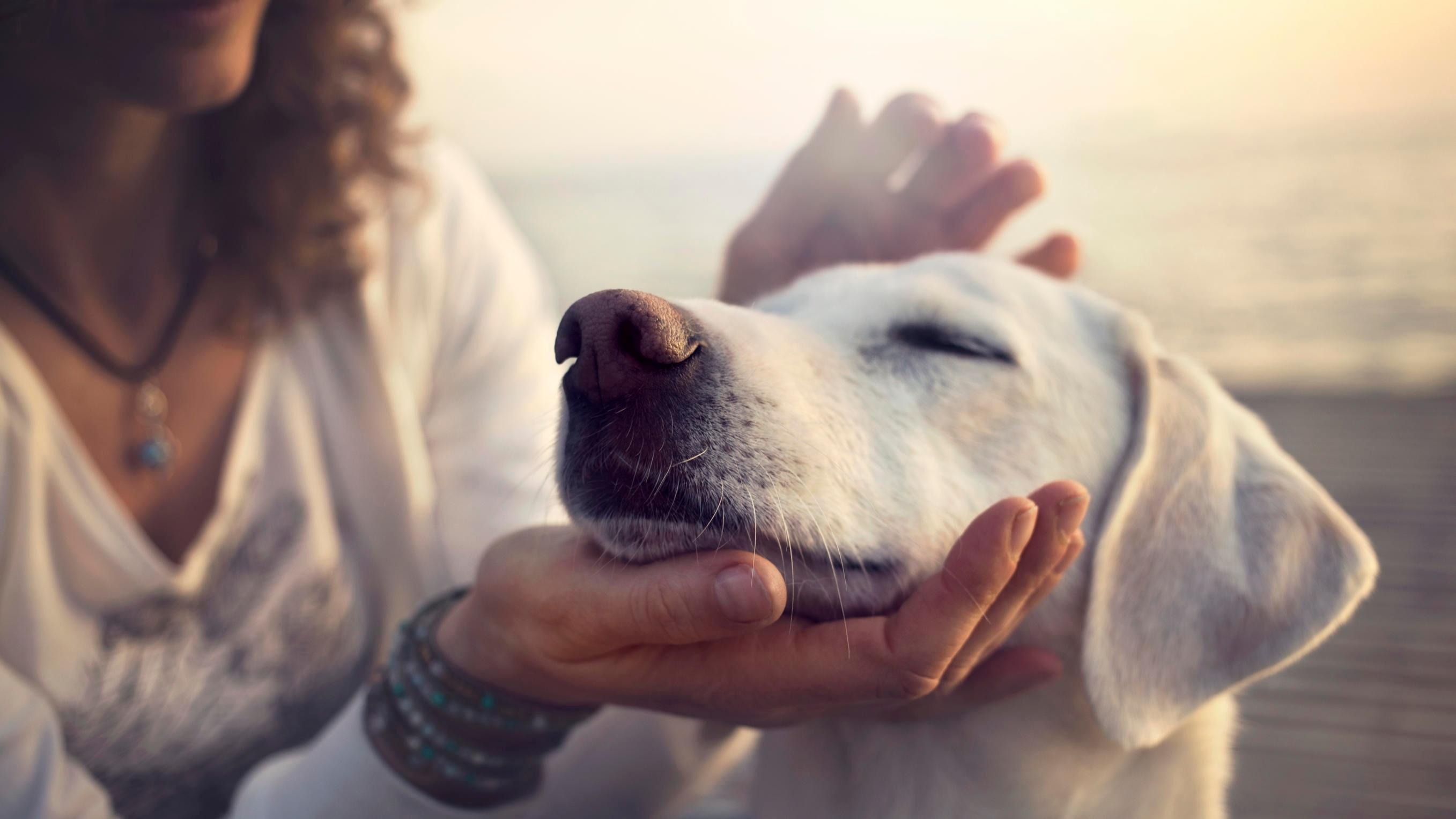 Hunde können auch Wellness genießen (Symboldbild)