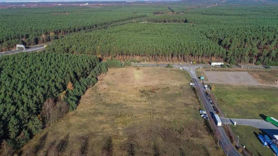Auf diesem rund 300 Hektar großen Grundstück in Brandenburg will US-Elektroautobauer Tesla eine Fabrik bauen. Foto: Patrick Pleul/zb/dpa