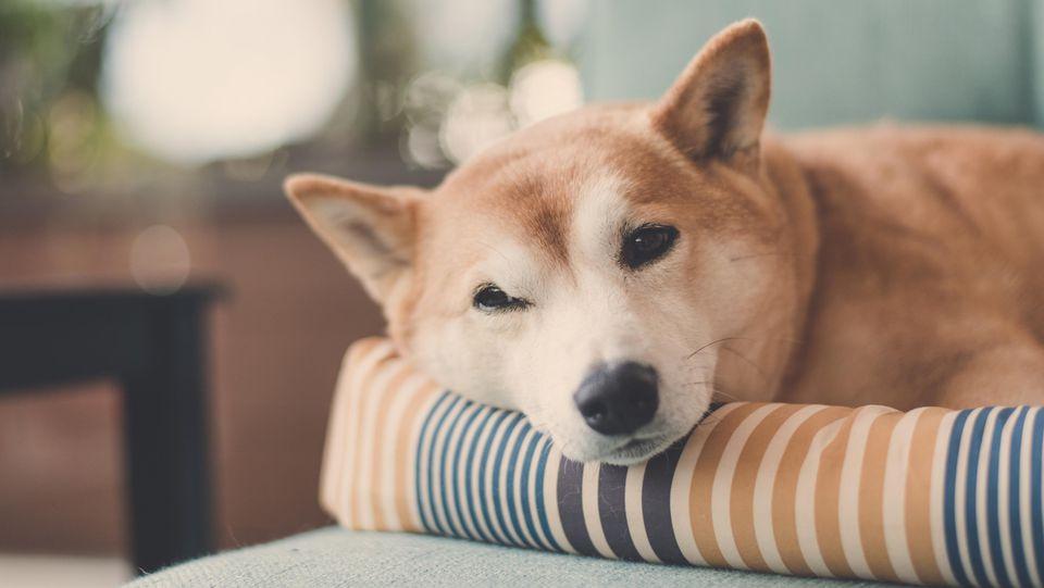 Der Lieblingsplatz eines jeden Hundes