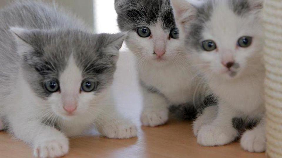 Drei Katzenbabys blicken in die Kamera. Foto: Peer Grimm/Archivbild