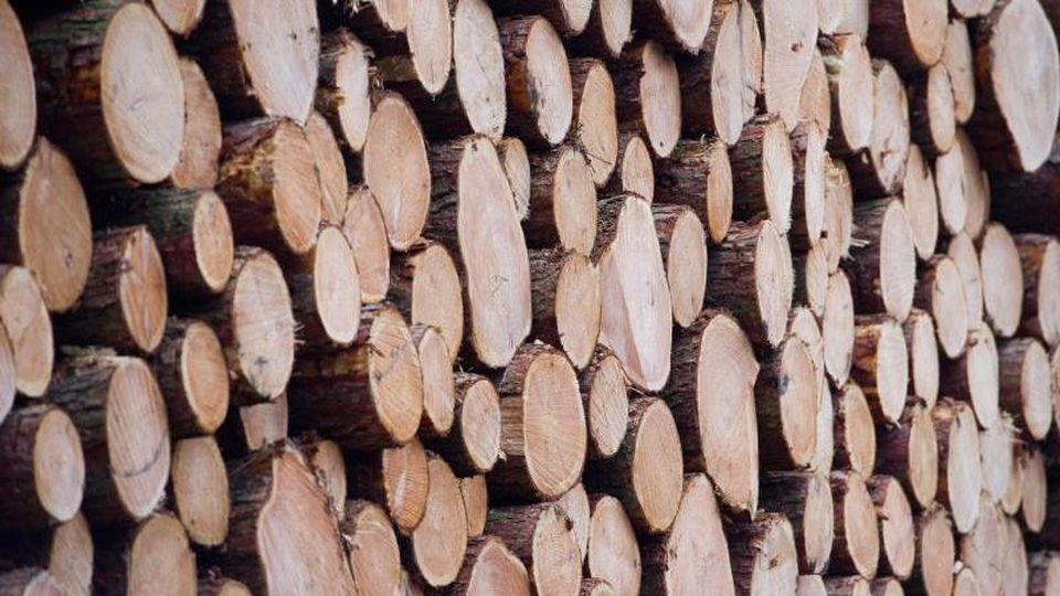 Baumstämme auf einem Holzlagerplatz. Foto: Stefan Sauer/zb/dpa/Archivbild