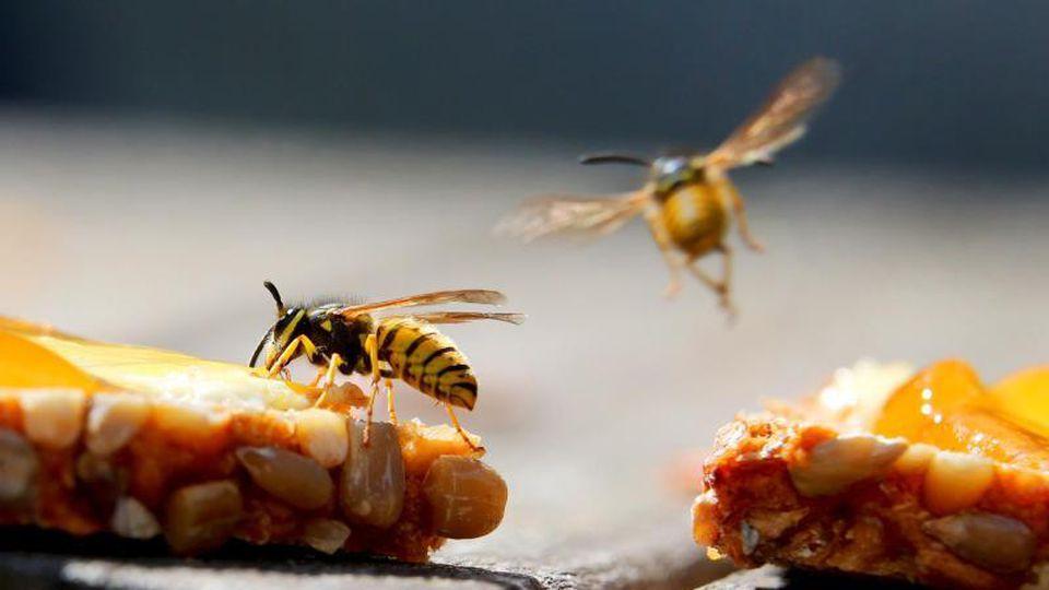 Süße Speisen, etwa ein Marmeladenbrot, sind für Wespen besonders anziehend. Foto: Karl-Josef Hildenbrand/dpa/dpa-tmn