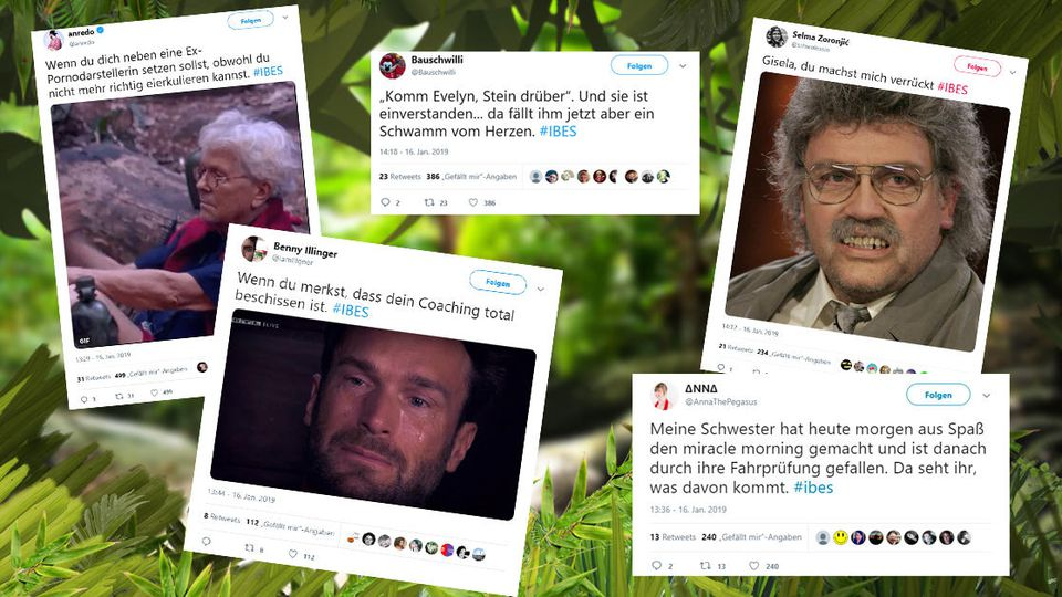 Dschungel Twitter-Reaktionen an Tag 6 im Camp.