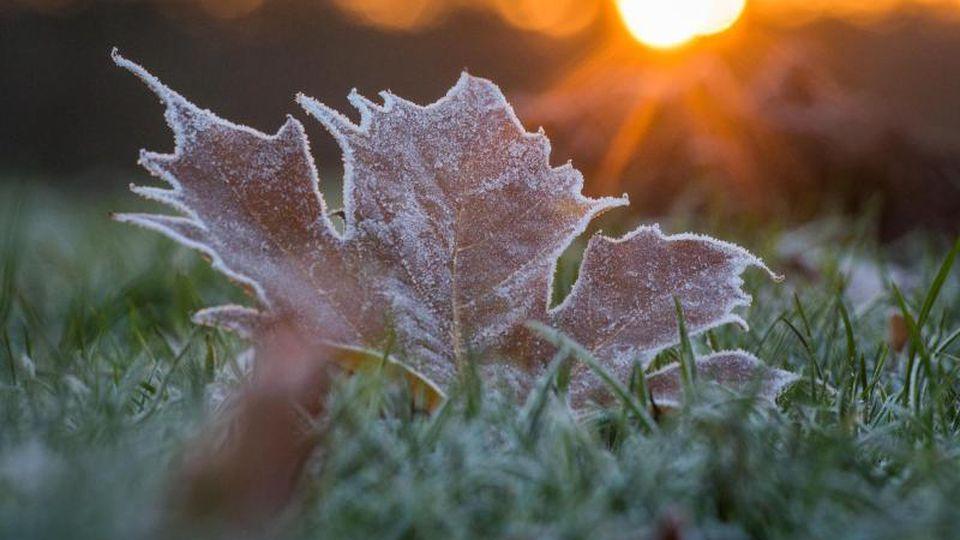 Reif bedeckt während des Sonnenaufgangs ein Blatt auf einer Wiese. Foto: Candy Welz/zb/dpa/Archivbild