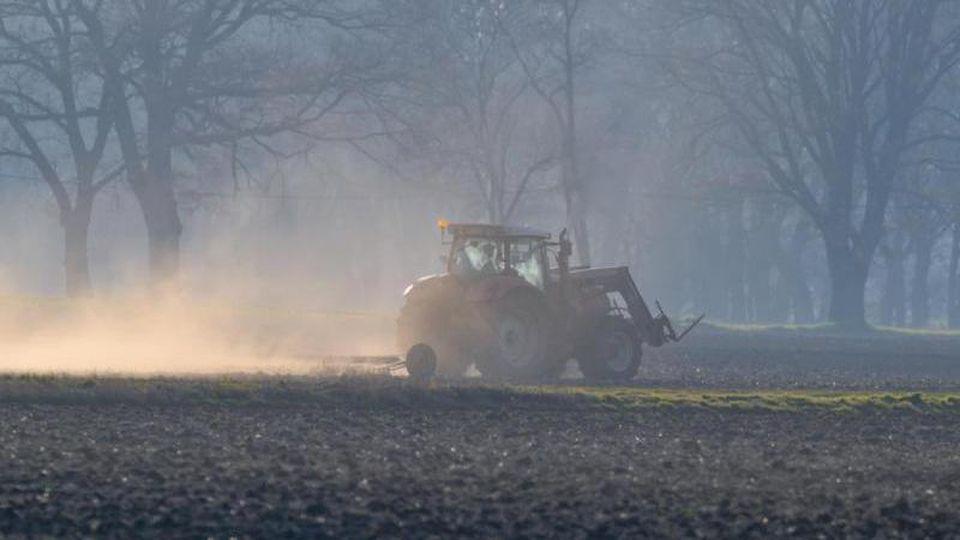 Ein Landwirt bearbeitet am frühen Morgen mit seinem Traktor und angehängter Egge einen Acker im Oderbruch im Landkreis Märkisch-Oderland und wirbelt dabei viel Staub auf. Foto: Patrick Pleul/dpa-Zentralbild/ZB