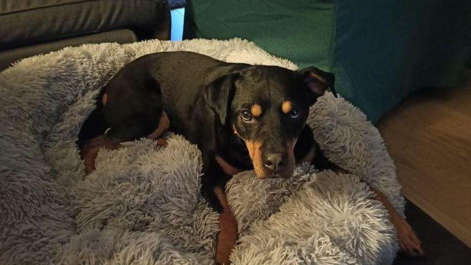 """Atos ist bei weitem kein """"Problem-Hund"""", finden seine neuen Besitzer."""