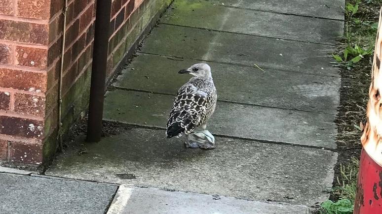 Ein Vogel sitzt auf den Boden und seine Füße sind gefesselt durch eine Einweg-Maske. Dass er sich von selbst befreien kann, ist unwahrscheinlich.