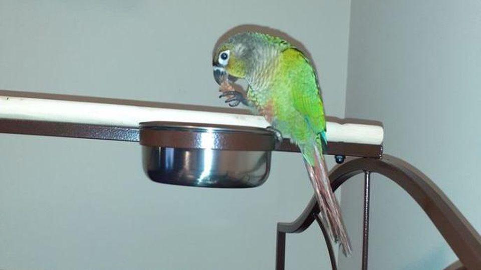Papagei Louie rettete seine Familie.
