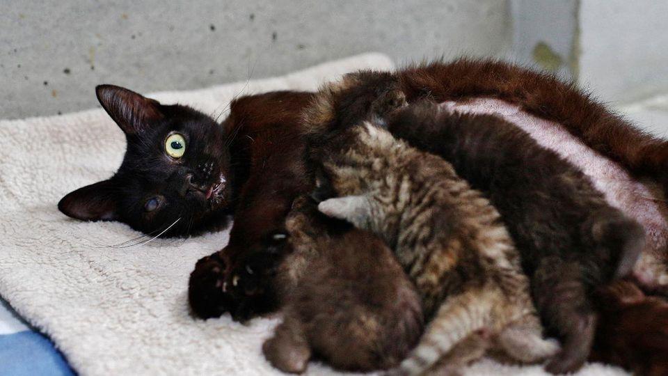 Bella kümmert sich liebevoll um ihre vier Jungen.