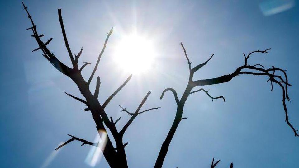 Die Silhouette eines toten Baumes zeichnet sich vor der Sonne ab. Foto: Sina Schuldt/dpa/symbol
