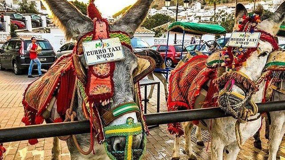 Die Tiere werden als Eseltaxi in Mijas verscherbelt.