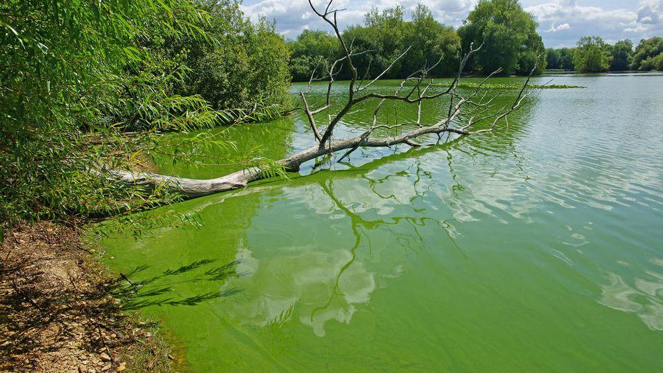 Trübes Wasser ist ein Anzeichen für Blaualgen.