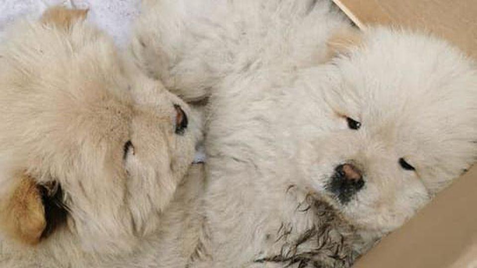 Das Tierheim Homburg warnt vor illegalem Welpenhandel