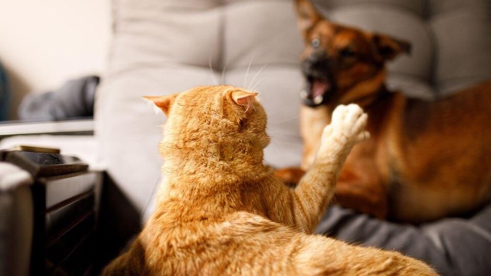 Hunde und Katzen haben unterschiedliche Temperamente - da fliegen schon mal die Fetzen.