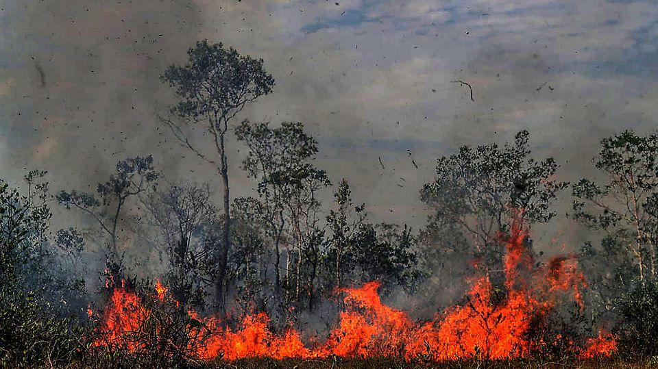 27.08.2019, Brasilien, ---: Feuer breitet sich in einem Waldstück aus. In Südamerika wüten derzeit schwere Waldbrände. Durch Brandrodung und Abholzung vernichtet der Mensch seit Jahrtausenden die Waldbestände - nicht zuletzt in Europa. In vielen Erdr
