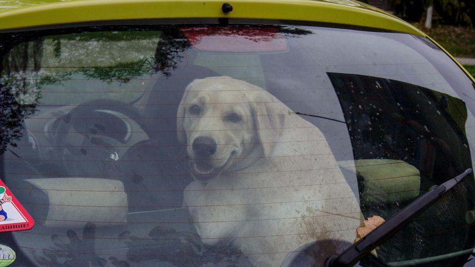 Hund im Auto eingeschlossen. (Symbolfoto)
