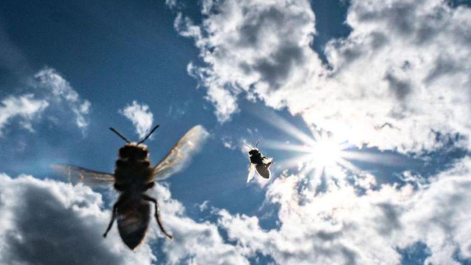 Bienen fliegen vor der Sonne am leicht bewölkten Himmel zu ihrem Stock. Foto: Frank Rumpenhorst/Archivbild