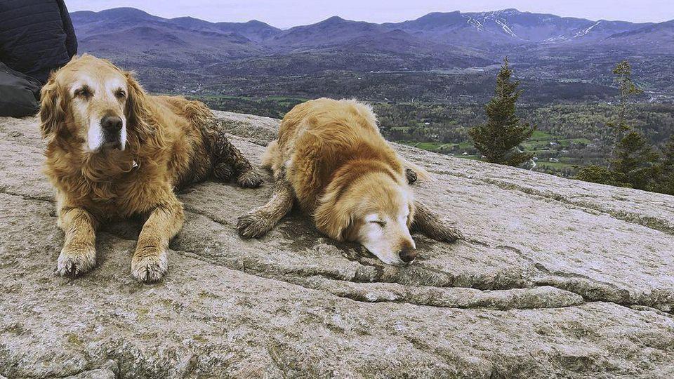 Beim Wandern in den Bergen hat ein irisches Pärchen einen verloren gegangenen Golden Retriever gerettet. Jetzt gibt's jedoch Ärger weil die Corona-Regeln missachtet wurden.