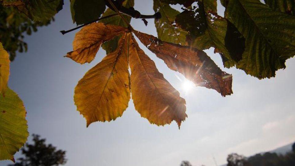 Die Sonne strahlt durch ein herbstlich gefärbtes Blatt. Foto: Tom Weller/dpa