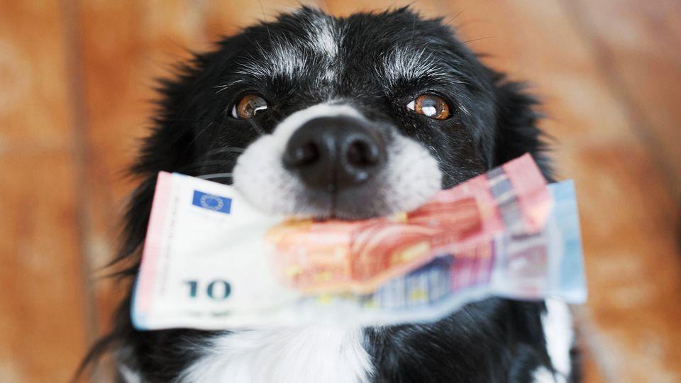 So viel kostet ein Hund