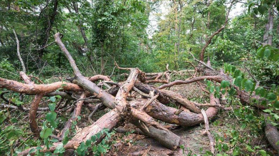 Ein Waldweg im Naturschutzgebiet Lennebergwald ist durch herumliegend Äste und Baumstämme blockiert. Foto: Andreas Arnold/dpa/Archivbild