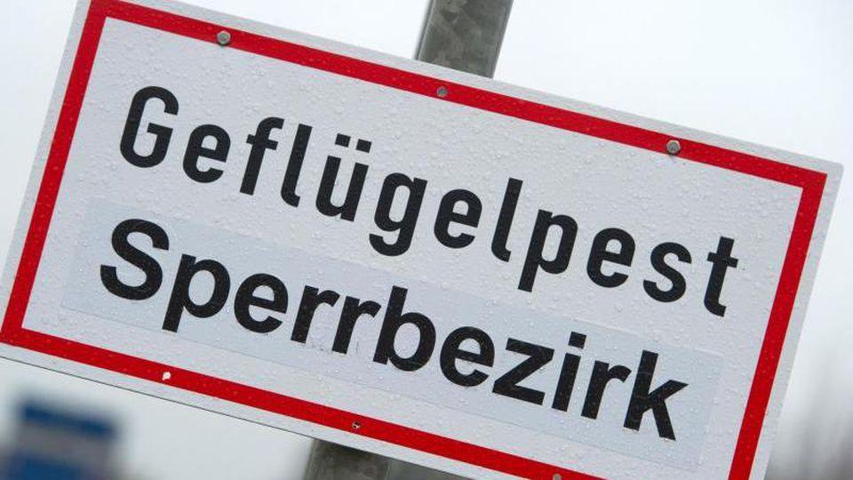 """Ein Schild mit der Aufschrift """"Geflügelpest Sperrbezirk"""" steht an einer Straße. Foto: Stefan Sauer/dpa-Zentralbild/dpa/Symbolbild"""
