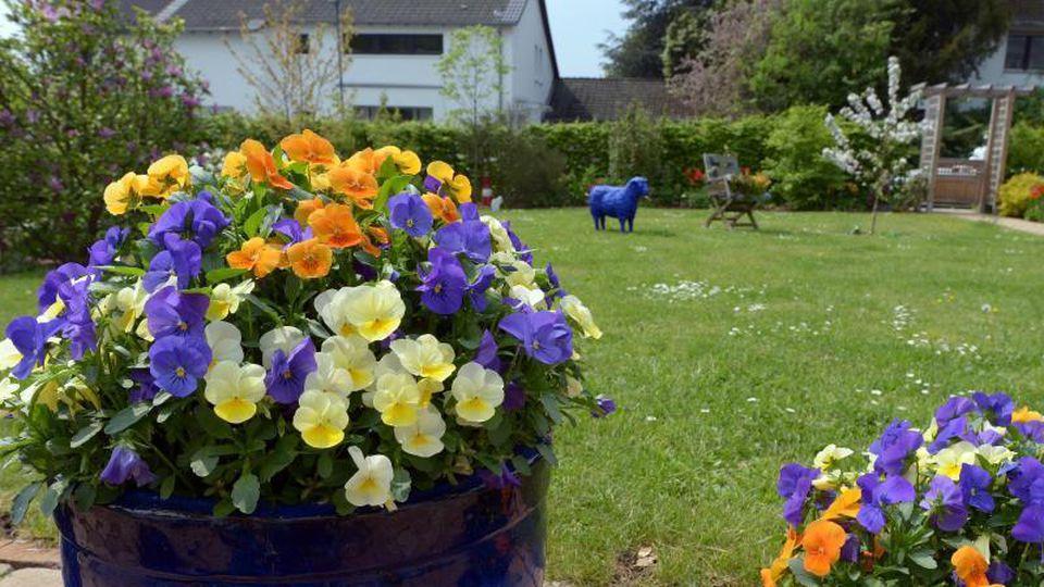 Blumen blühen im Garten einer Hobbygärtnerin. Foto: picture alliance / dpa/Archivbild