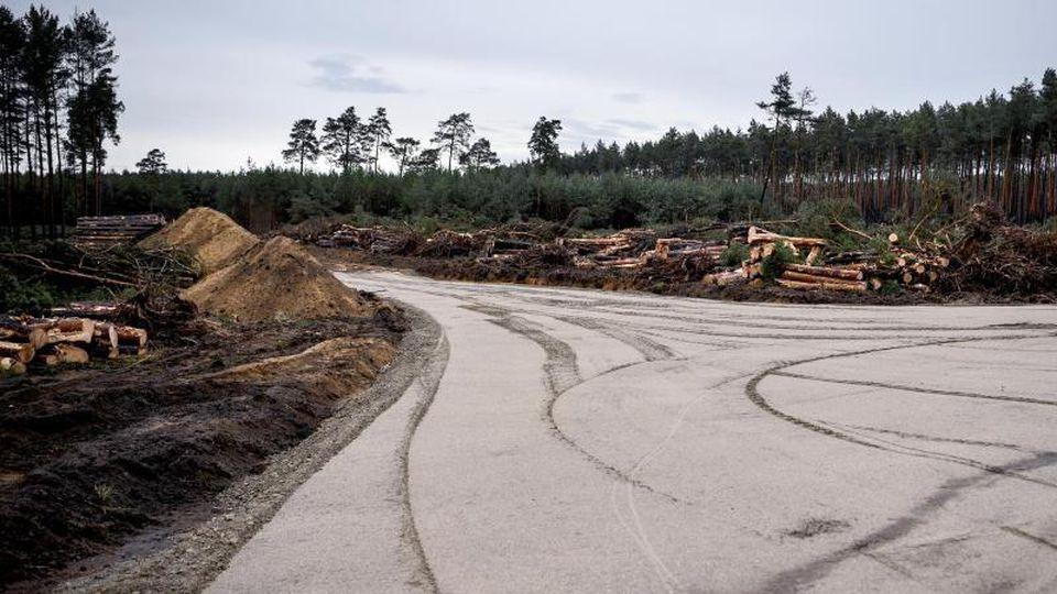 Die Einfahrt zum Gelände für die geplante Tesla-Fabrik. Foto: Britta Pedersen/dpa-Zentralbild/dpa
