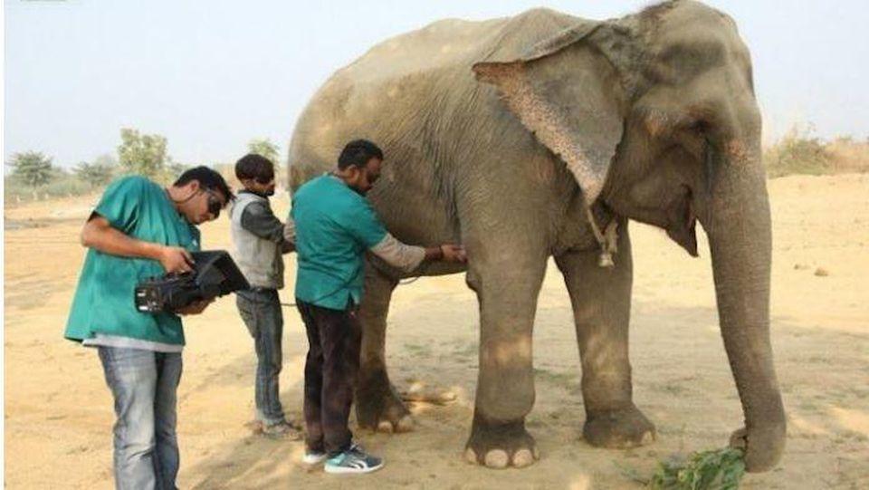 Elefanten-Krankenhaus in Indien: Misshandelte Dickhäuter liebevoll aufgepäppelt