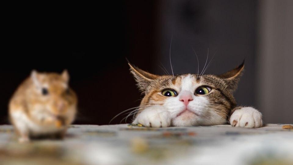 Mäuse gehören zu den Tieren, die von Katzen gerne und häufig gefangen werden...