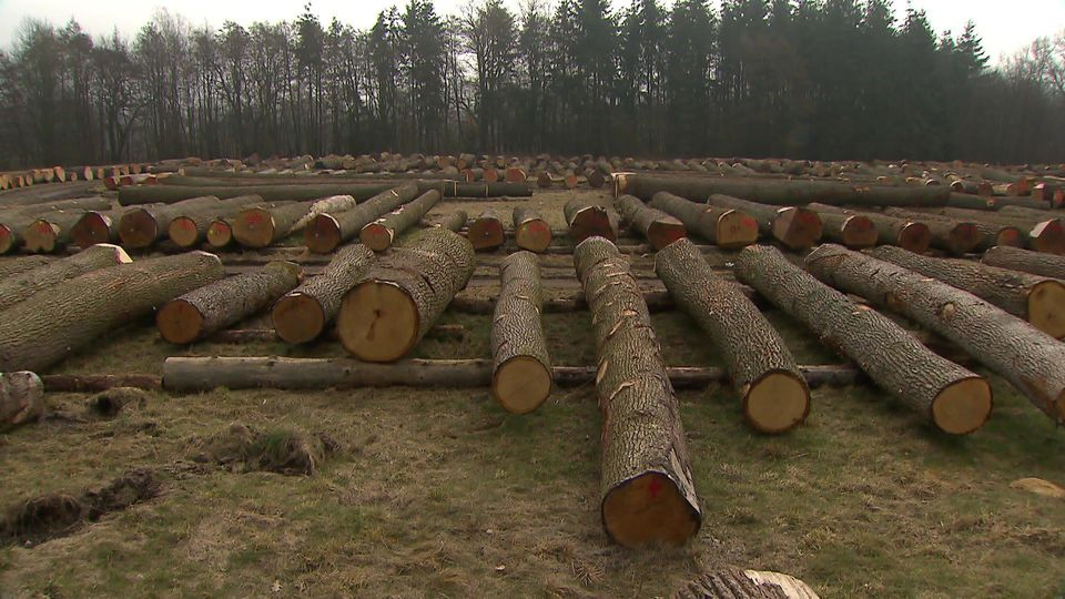 Wertholzversteigerung in Daldorf
