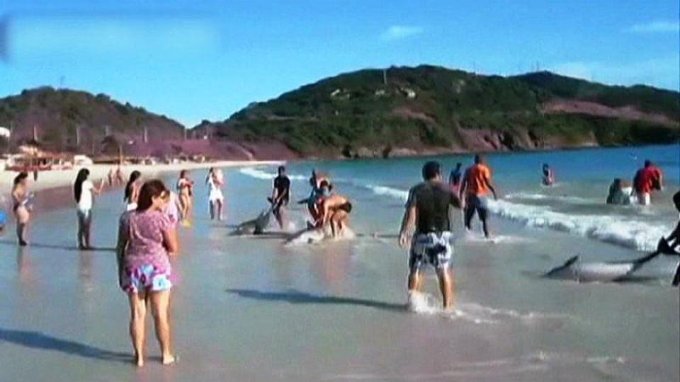 Delfinrettung Brasilien