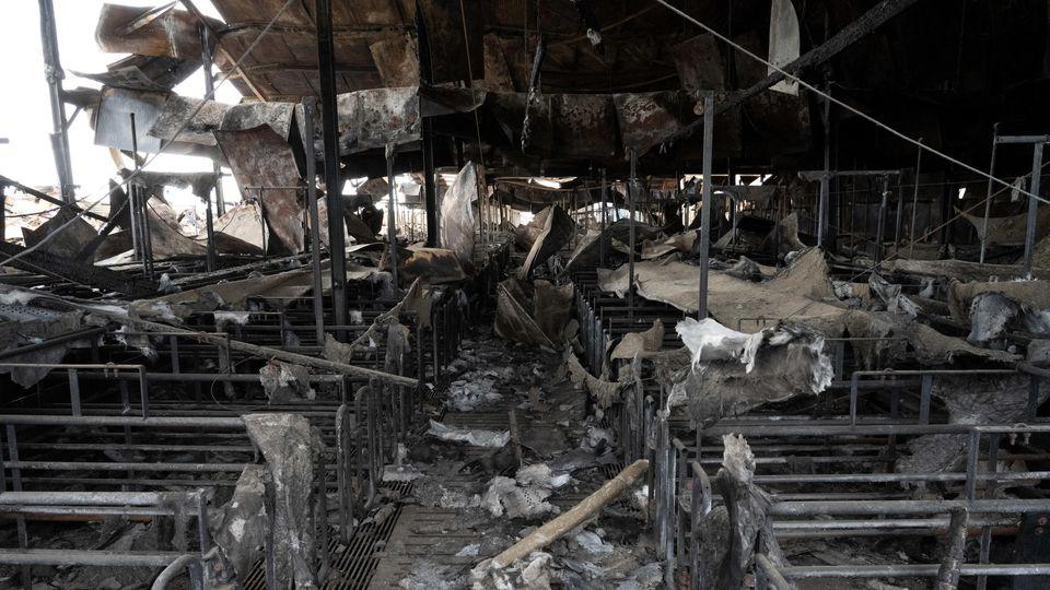 Die Schweinezuchtanlage nach dem Großbrand.