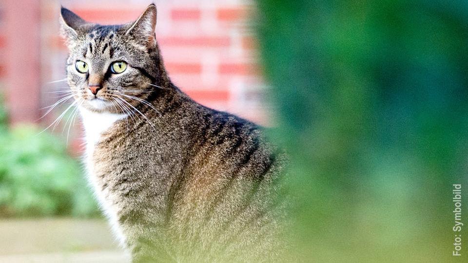 Katze Angeschossen