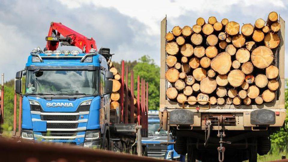 Baumstämme liegen auf einem Güterzug im Erzgebirge. Foto: Jan Woitas/dpa-Zentralbild/dpa