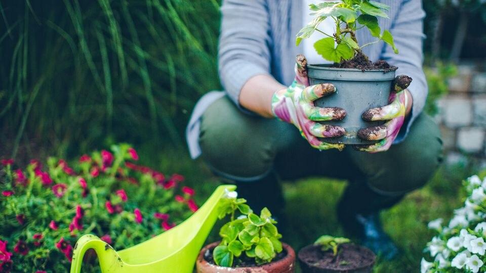 Immer mehr Menschen entdecken gerade in der Corona-Krise ihre Lust aufs Gärtnern neu.