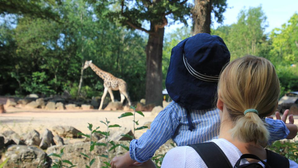 Sommerimpressionen aus dem Zoo Hannover - so könnte es bald wieder aussehen
