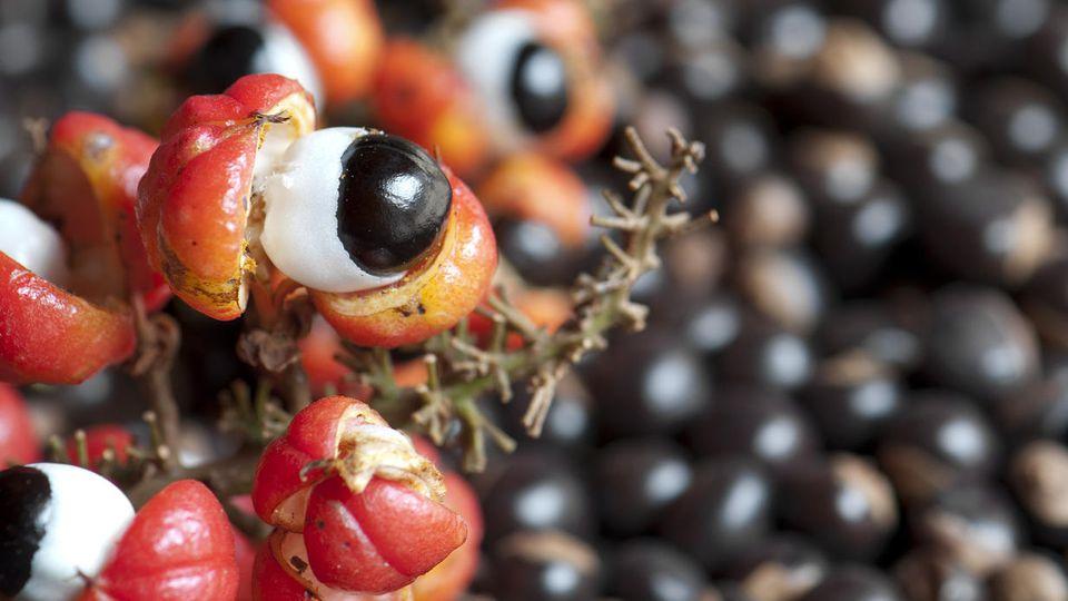 Guarana ist vor allem wegen des enthaltenen Koffeins beliebt