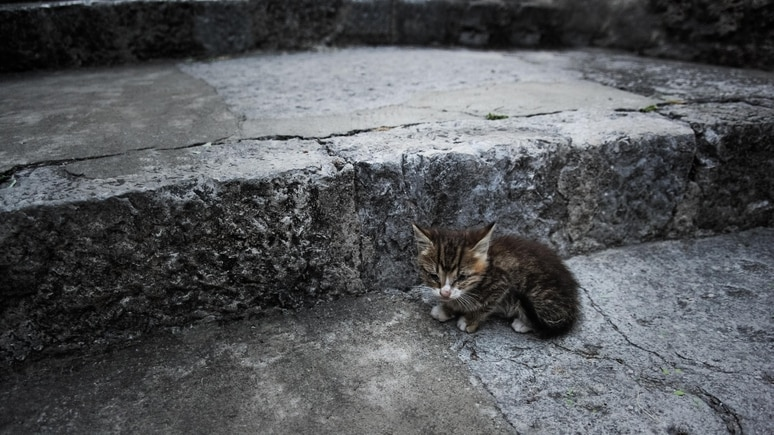 Viele Katzen werden von überforderten Besitzern ausgesetzt.