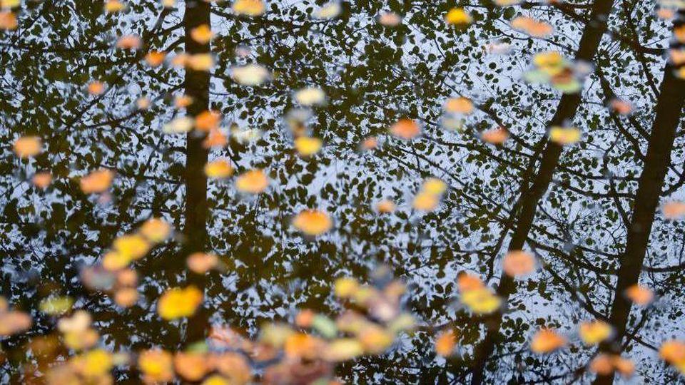 Bunt gefärbte Blätter schwimmen auf dem Wasser eines Sees, während sich Bäume in der Oberfläche spiegeln. Foto: Patrick Pleul/dpa-Zentralbild/dpa