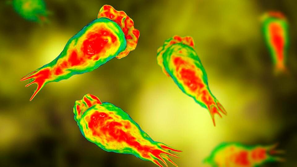 Ein sechsjähriger Junge ist an den Folgen einer Infektion gestorben, die von einer hirnfressenden Amöbeverursacht worden war.