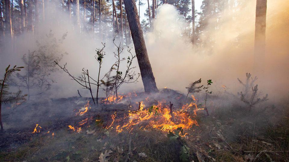 Viele Waldbrände werden die weggeworfene Zigaretten verursacht