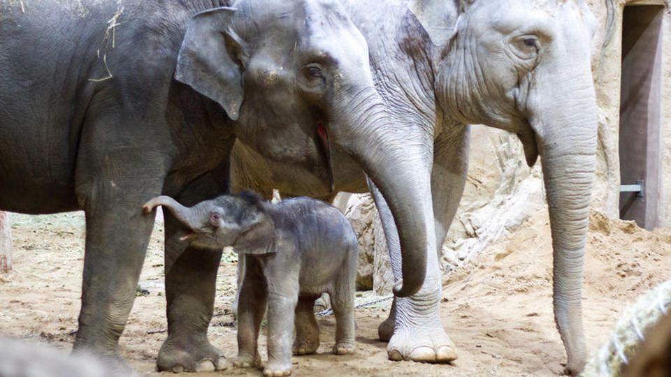 Elefanten aus dem Leipziger Zoo