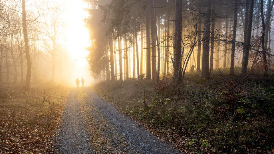 Eine Zeugin sah den Nacktjogger auf einem Wanderweg im Wald (Symbolbild).